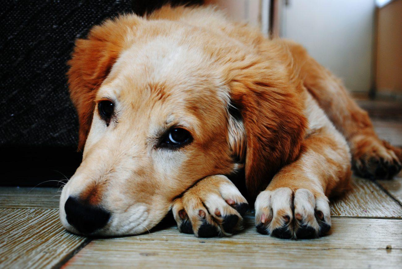 Am I Insured if my Dog Bites Somebody?