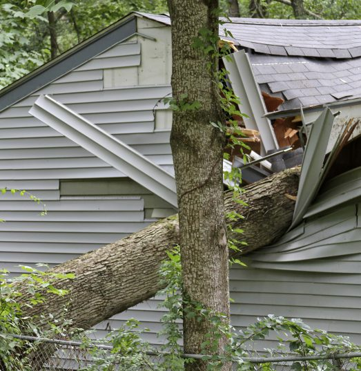 Does house insurance cover damage caused by fallen trees?